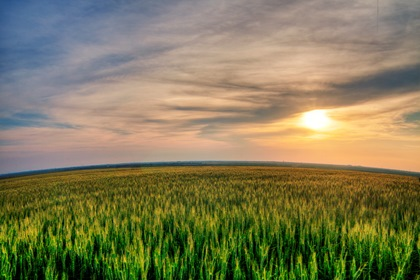 Sunset Sky Green Field Background