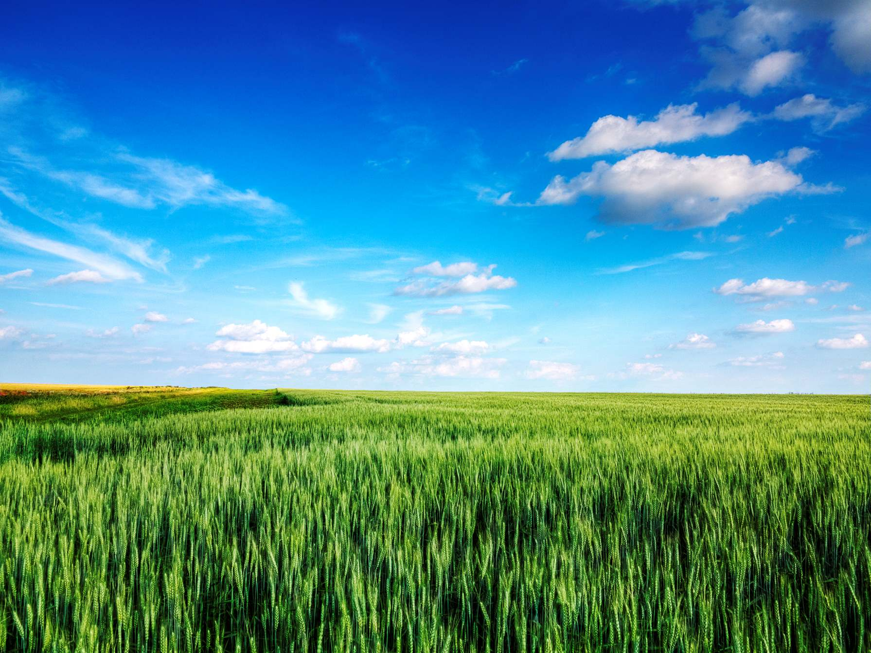 Blue Sky Clouds Green Field Background