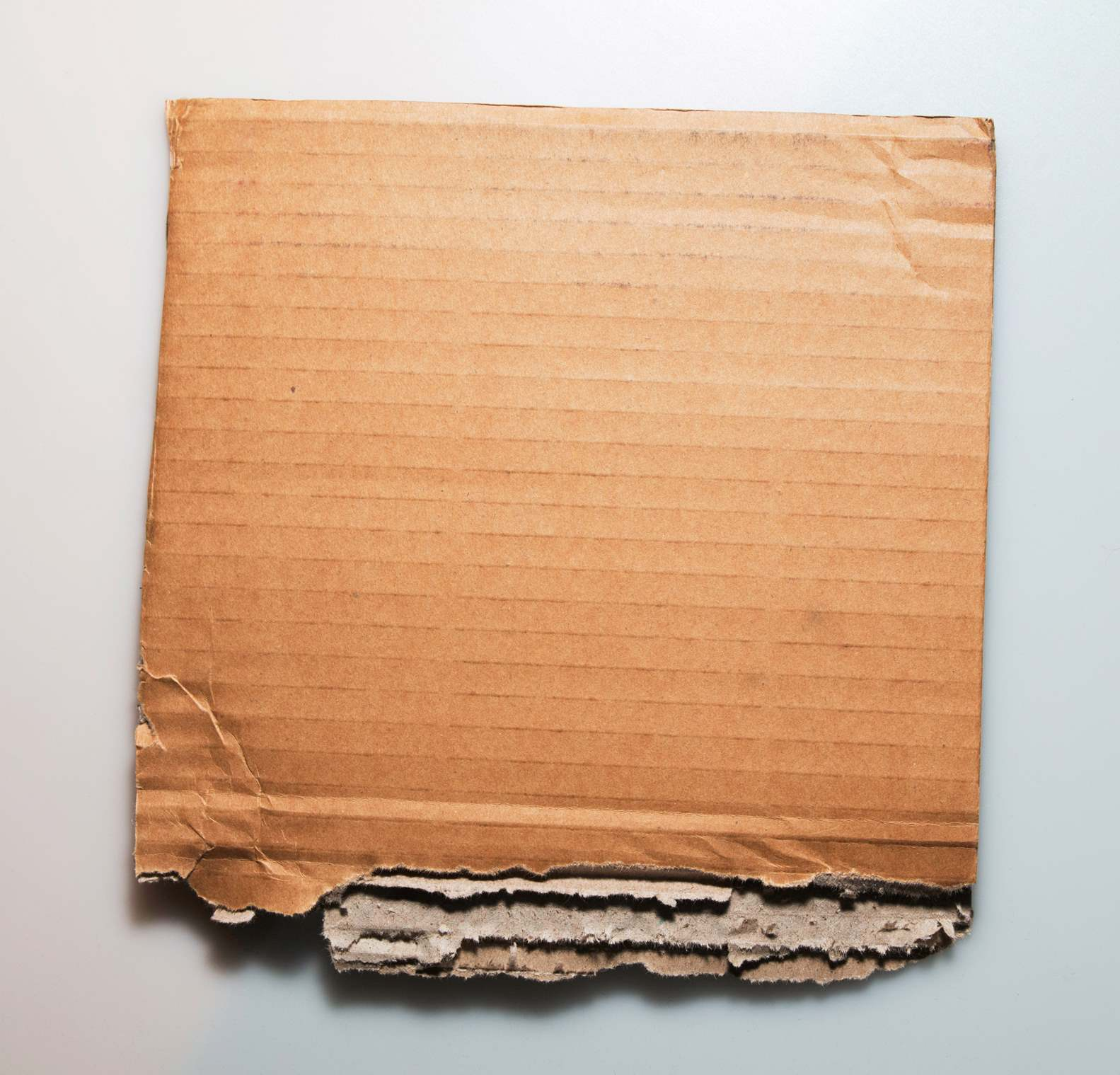 Torn Cardboard Paper On White Background - PhotoHDX