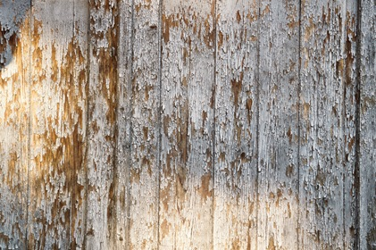 Old Withered Wood Fence