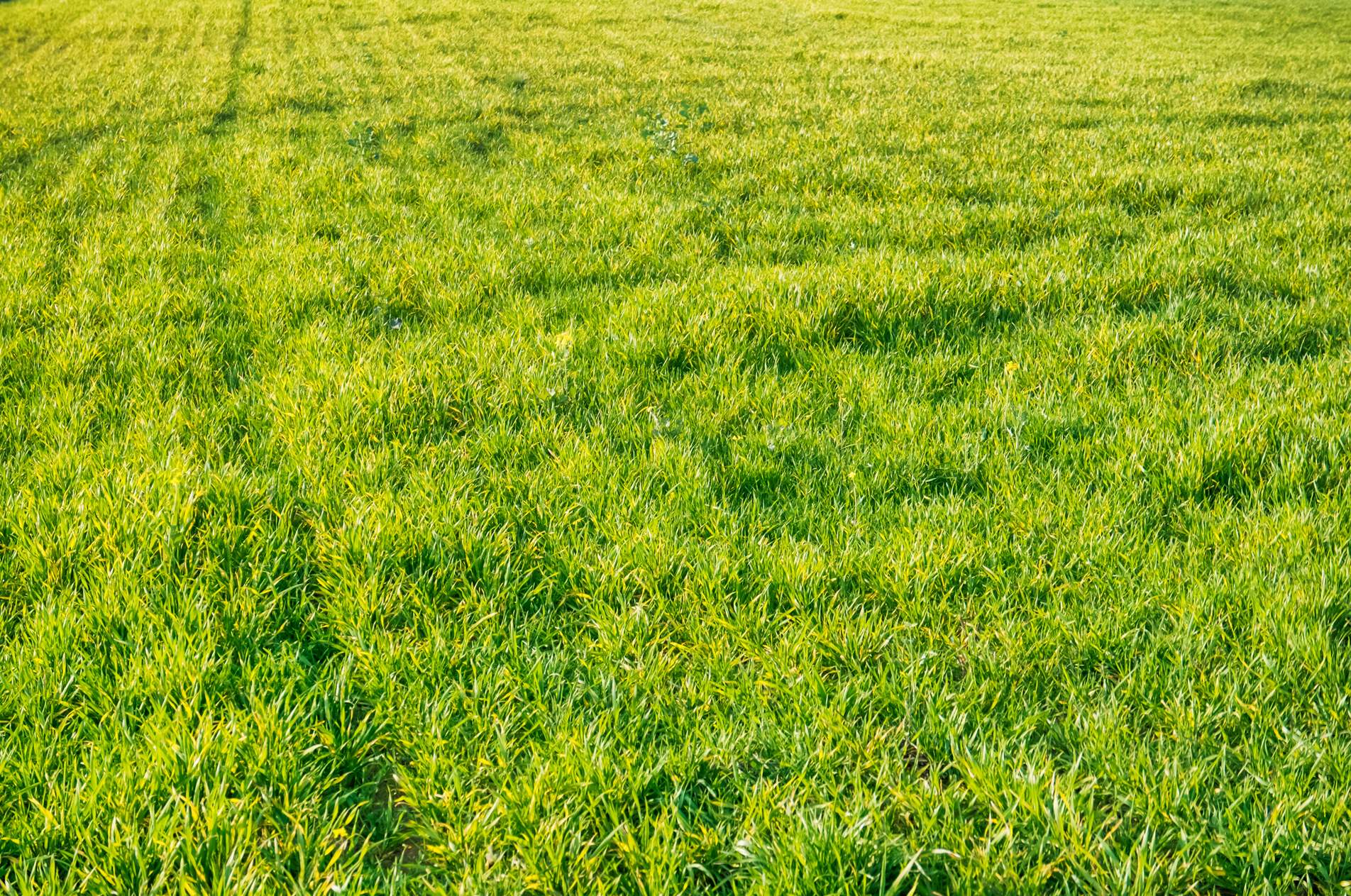fields and grass - photo #22