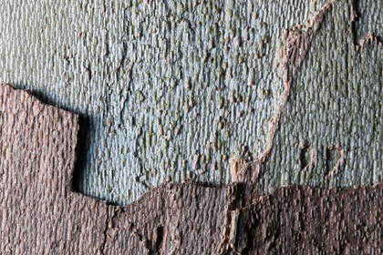 Close Up Tree Bark Texture
