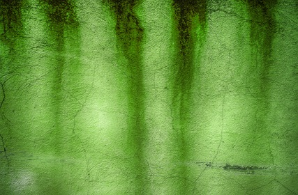 Grunge Green Wall Texture Paint Trace