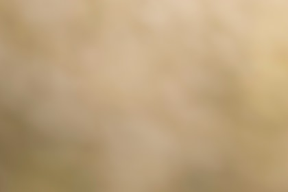 Abstract Light Brown Background