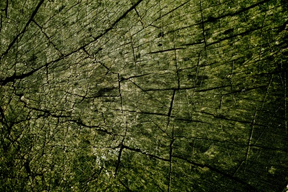 Dark Green Grungy Wood Texture