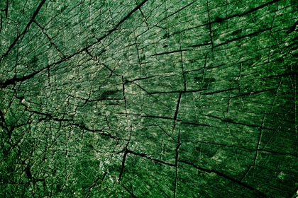 Green Cracked Grungy Wood Texture