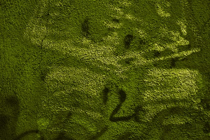 Grungy Green Scrawled Wall Texture
