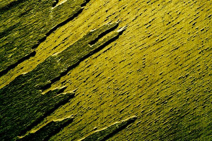 Grungy Green Wood Texture